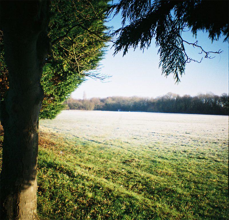Frosty Morning in January