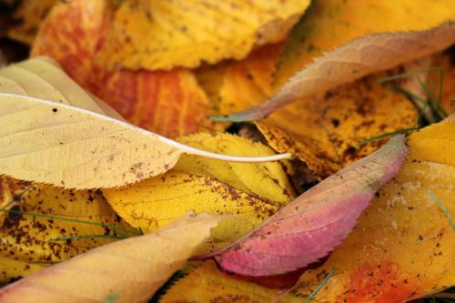 Aumtumn leaves by Lorrie Whittington