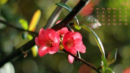 April Blossom - 1366 x 768