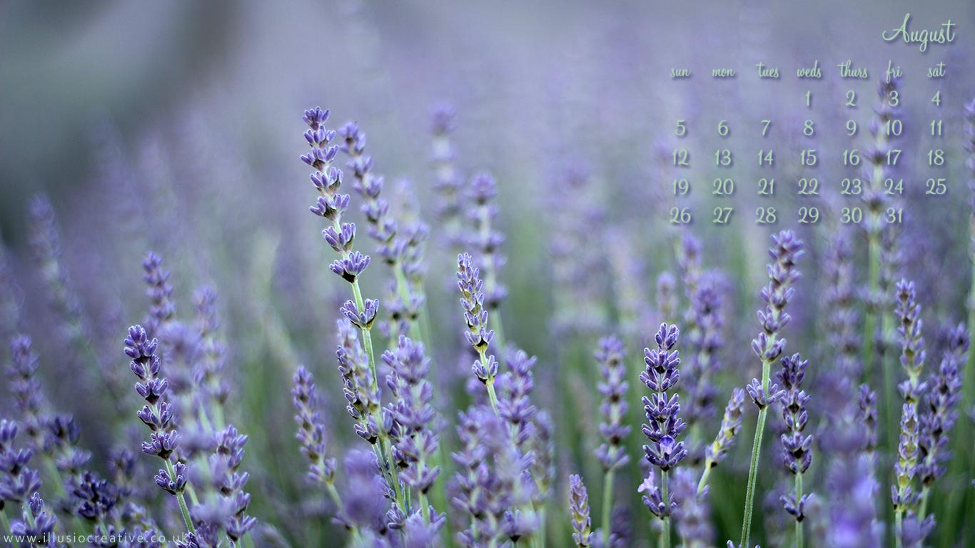 August 2012 - Lordington Lavender - 1366 x 768
