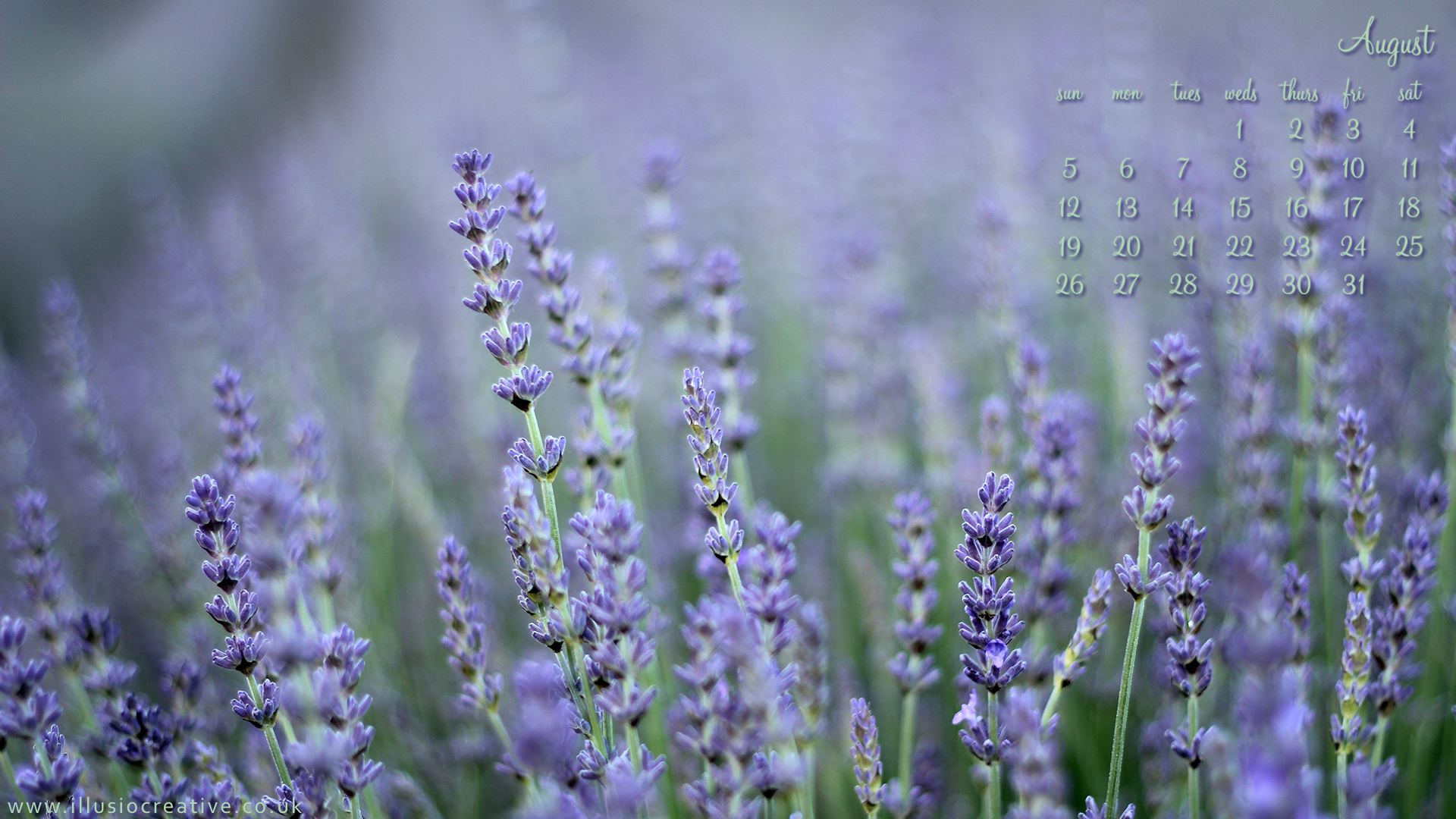 August 2012 - Lordington Lavender - 1920 x1080