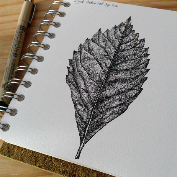 Beech Leaf - ink illustration