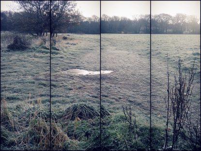 Frosty landscape
