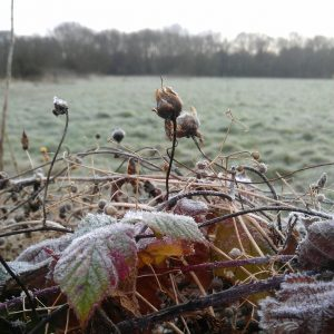 Frost comes to call..