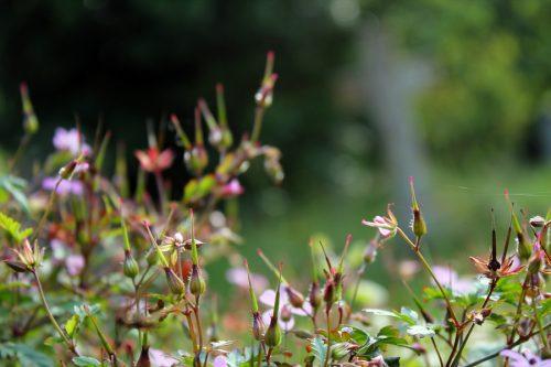 Flowers in Graveyard