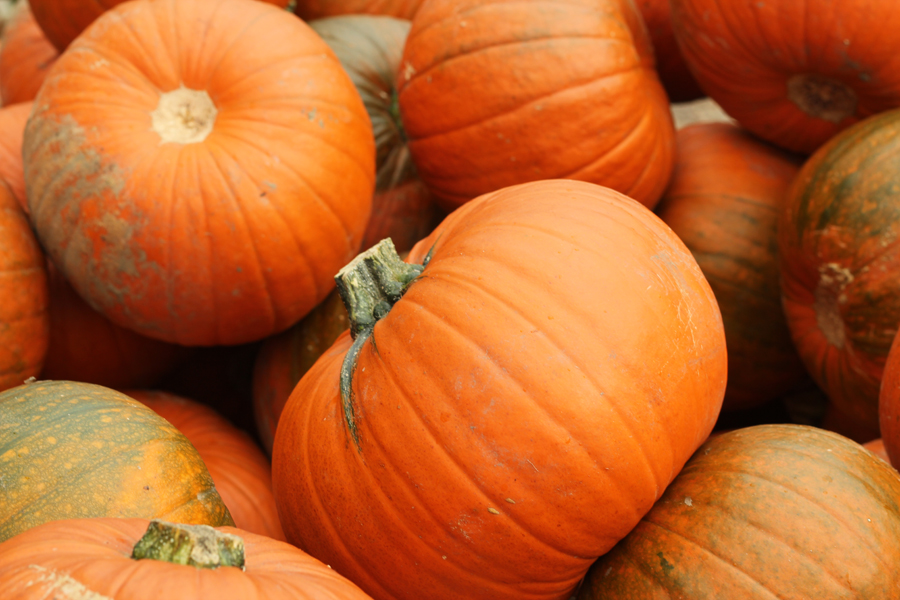 Pumpkin Festival in Slindon