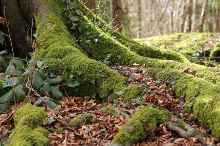 Eartham Woods