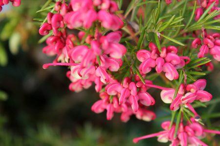 Sweetyly Pink - Wordless Wednesday