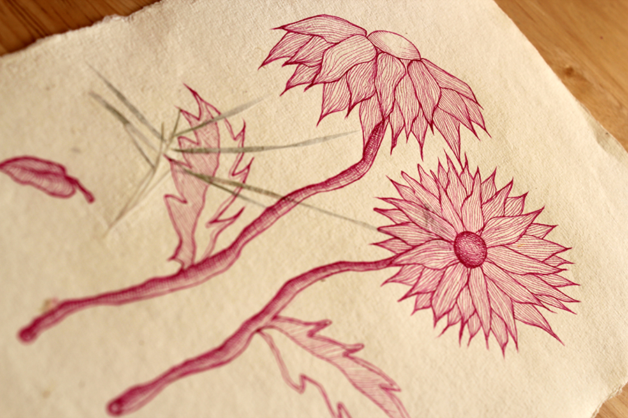 Chrysanthemums - Original Drawing in Ink