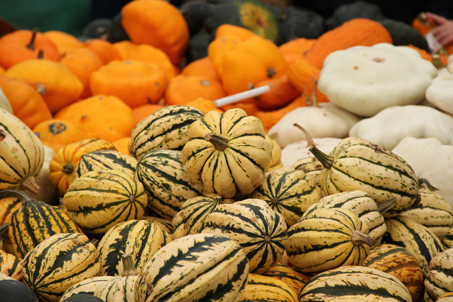 Slindon Pumpkin Festival 2013