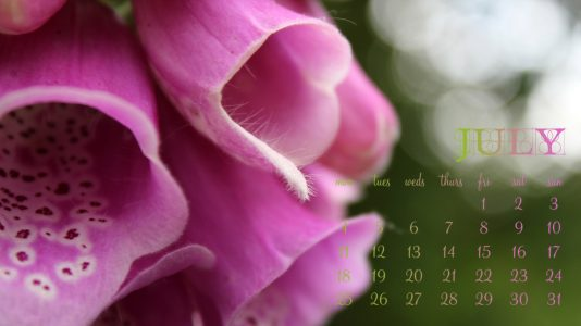 July 2011 Desktop Wallpaper - Foxglove