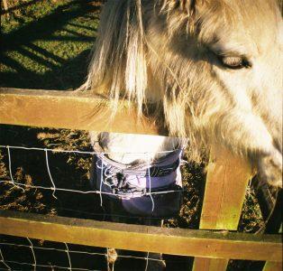 Little Horse III