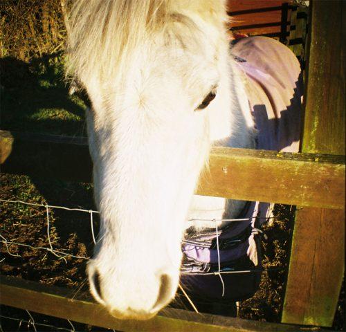 Little Horse IV