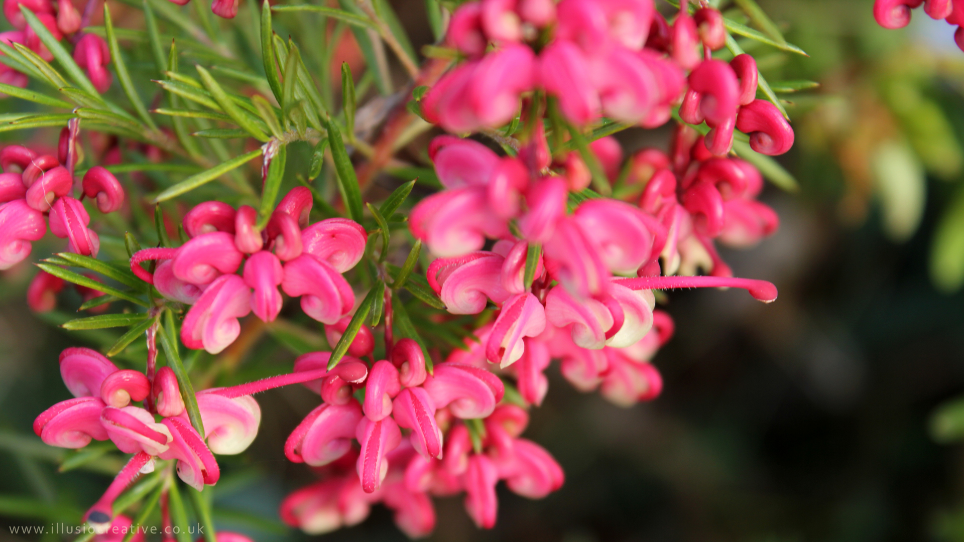 Lorrie Whittington Little Pink Flowers 1290 X1080