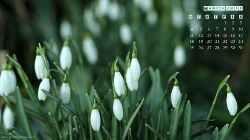 March 2013 - 1920 x1080 - Snowdrops