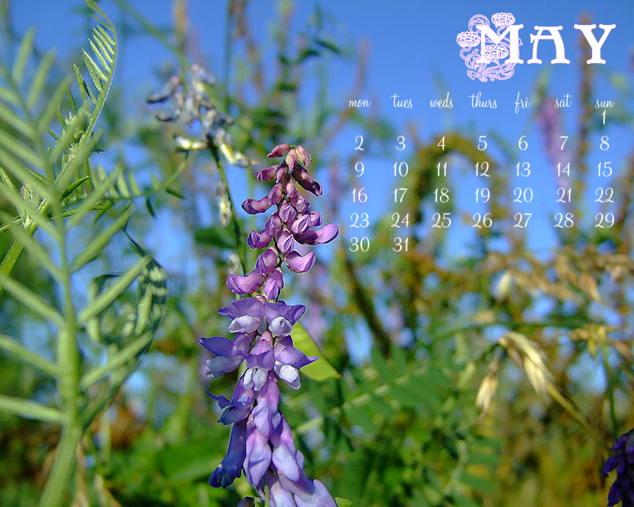 May 2011 Desktop Calender