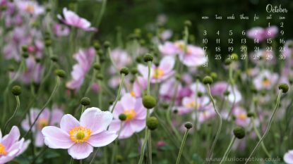 October - Autumn Flowers- 1366 x 768