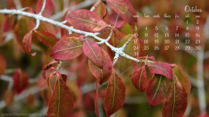 October - Autumn Leaf - 1366 x 768